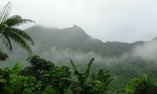 KAVA wächst vor allem an den Berghängen der Inseln